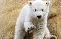 Eisbär-Mädchen: Bürgermeister Ludwig wird Pate