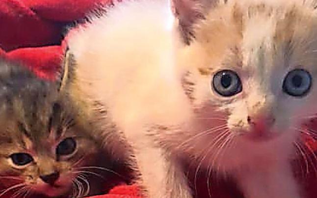 Tierhasser entsorgte süße Babykatzen im Biomüll