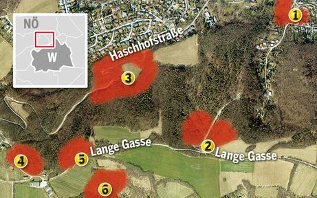 Eschensterben: Wald-Sperre in Klosterneuburg