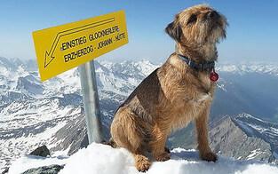 Erstbesteigung: Hund am Großglockner