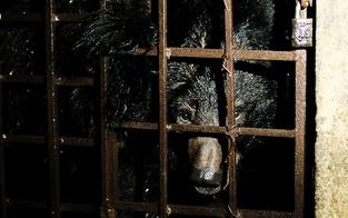 Zwei Bären aus fensterlosem Keller gerettet