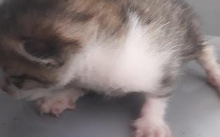 Feuerwehr rettet Katzen-Baby aus Motorraum eines Autos