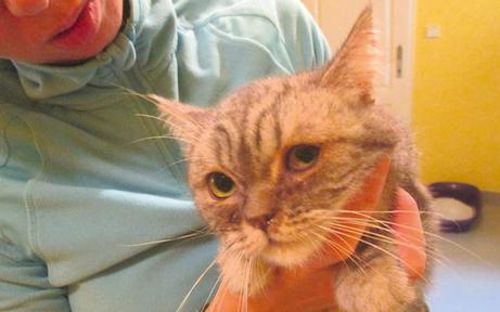 Irre Katzen-Lady hortete 40 Tiere