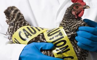 Hochsaison im Labor der Vogelgrippe-Jäger