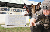 Soldat zerfleischt: Werden Hunde getötet?