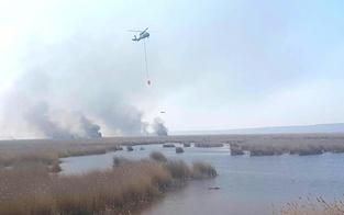 Black-Hawks bei Großbrand am Neusiedler See im Einsatz