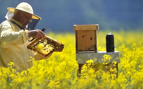 Bienensterben: Imker kämpfen gegen Seuchen