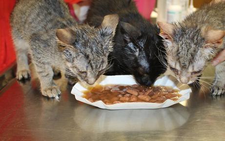 Acht Katzenbabys vor Kältetod gerettet