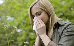 Pollen-Alarm so früh wie nie