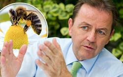 Biene sticht Minister ab