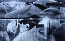 Nova Rock: Zeltschlitzer-Bande geschnappt