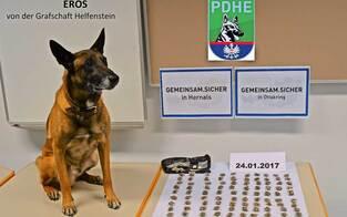 Polizei-Spürnase Eros erschnüffelt Marihuana