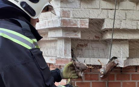 Wiener Feuerwehr rettet Turmfalken aus misslicher Lage