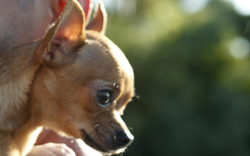 21-Jährige schnürte Hund mit BH Schnauze zu