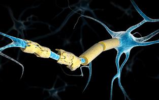 Multiple Sklerose in allen Verlaufsformen gut behandelbar