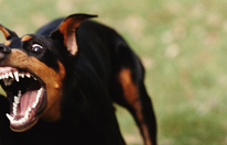 Hund beißt 8-Jähriger mitten ins Gesicht