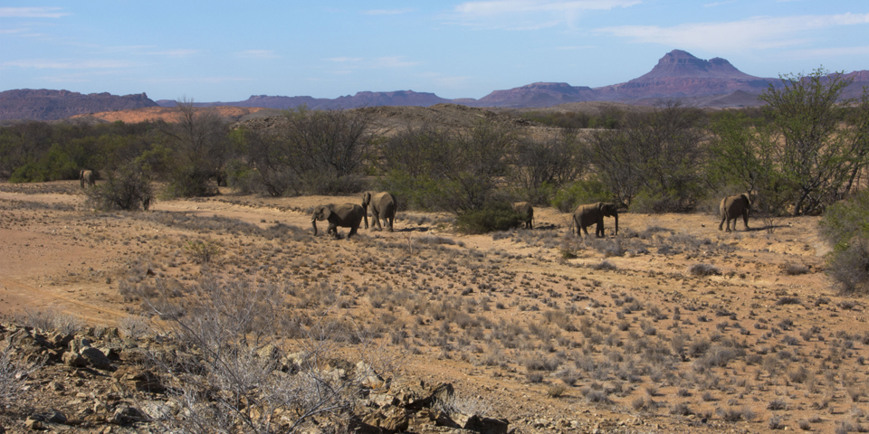 Huab Namibia Elefanten