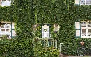 50 Häuser bald grün statt grau
