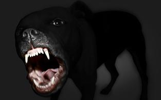 Hund beißt Polizistin - Tierbesitzer angezeigt