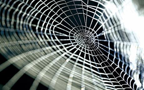 Spinnen-Plage lässt Bewohner verzweifeln