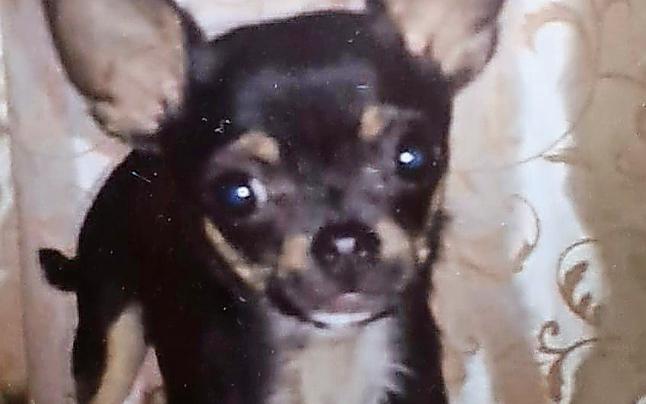Happy End für Böller-Hund ''Joey''