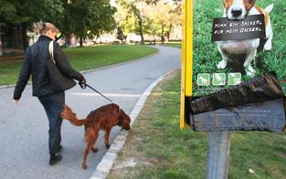 Hundekot: 35 Euro in Klosterneuburg fällig