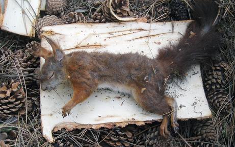 """""""Eichhörnchen-Mord"""" im Schrebergarten"""