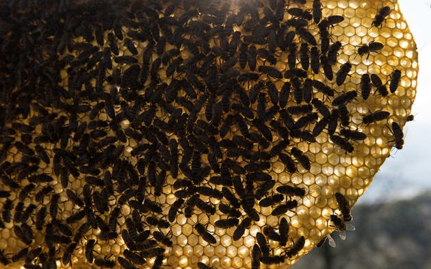 Imker Bienen