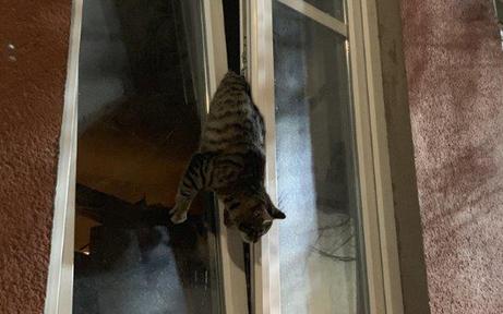 Während Besitzer schlief: Katze in Fenster gefangen