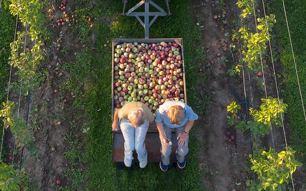 """Millionen-Bauer muss fünf Jahre in Haft   """"Apfel-König"""" betrog Finanzbehörden"""