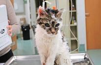 Blinde Katzen-Oma herzlos ausgesetzt