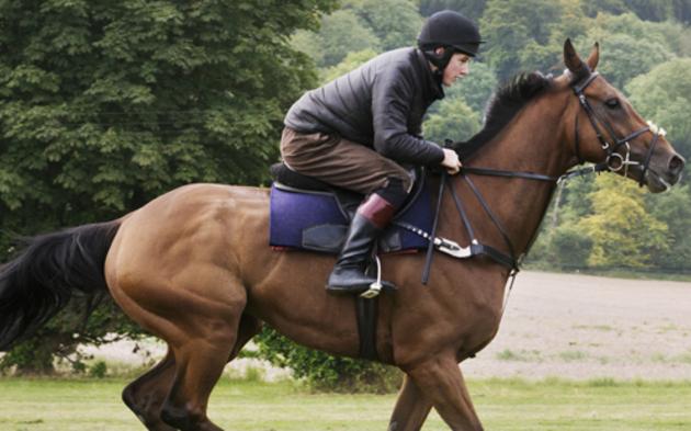 Pferd Reiter
