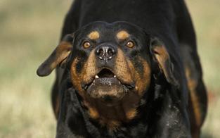 Mädchen (3) durch Hundebiss verletzt