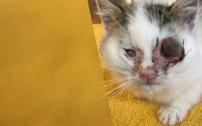 Schwer krankes Katzenbaby bei Eiseskälte ausgesetzt
