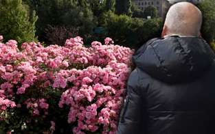 Schlägerei wegen gepflückter Rosen in Wien-Floridsdorf