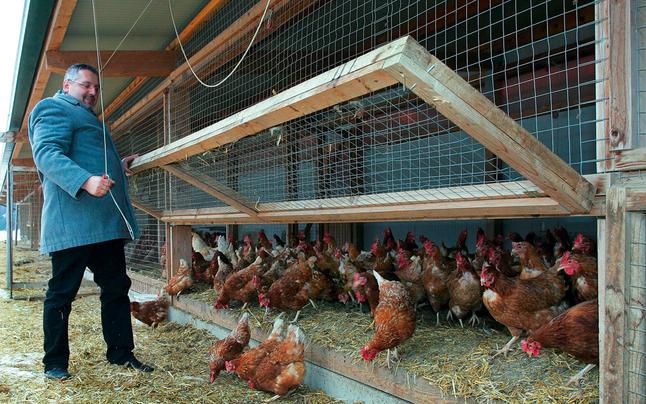 Tonis-Eier in Konkurs: Bauern zittern