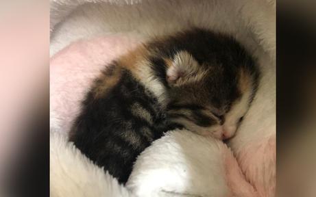 Kätzchen-Waise neben seiner leblosen Mutter gefunden