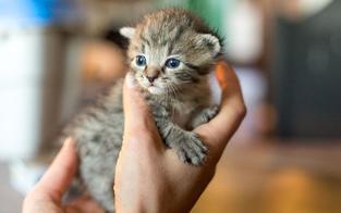 So geht es dem Kätzchen aus der Müllpresse