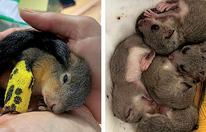 Süße Tierbabys vor dem Tod gerettet