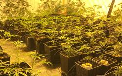 Cannabis-Anlage ausgehoben: 37-Jähriger festgenommen