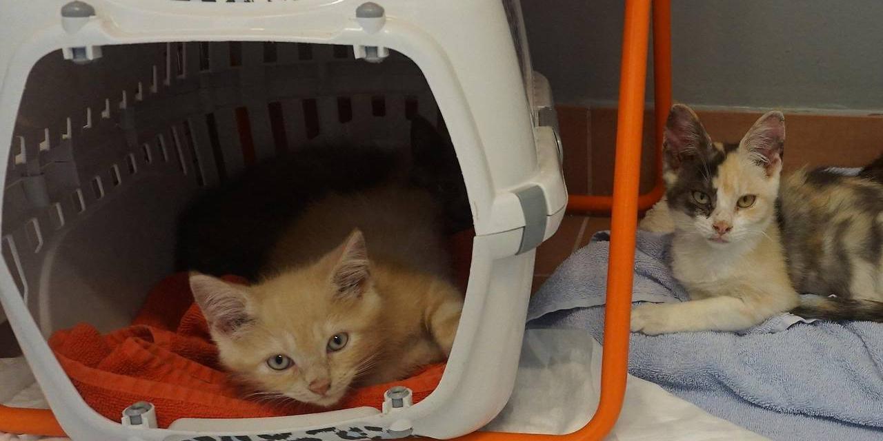 62 Katzen aus Wiener Wohnung befreit Brigittenau