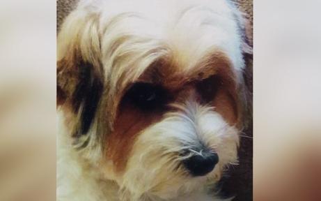 """Hund """"Daisy"""" zu Weihnachten am Bahnhof gestohlen"""