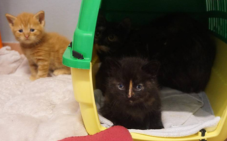Frau hortete 62 Katzen in Wiener Wohnung: Tiere befreit