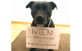 Hundehalter wehren sich: Demo gegen neues Hundegesetz