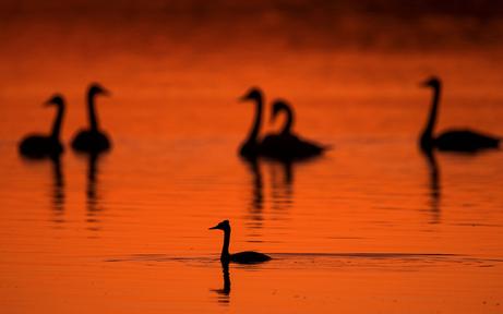 Nationalpark ohne Vogelgrippe-Präventionsmaßnahmen