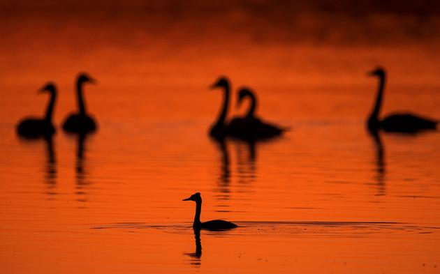 Vogelgrippe See