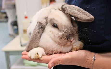 Verletztes Kaninchen eiskalt auf Donauinsel ausgesetzt