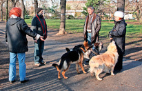 Kampfhund ohne Schein kostet bald 1.000 Euro