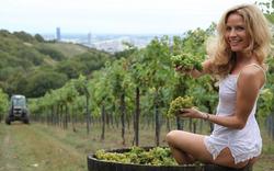 Grinzings Weingärten als UNESCO-Welterbe?
