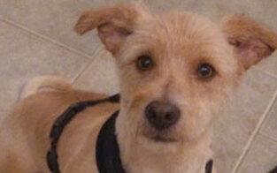Einbrecher erschlägt Haushund